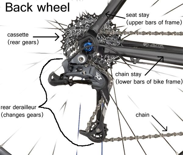 labeled diagram of a back bike wheel