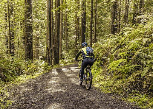 man riding a bike down a dirt forest trail